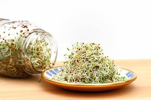 graines germées à consommer bon pour la santé